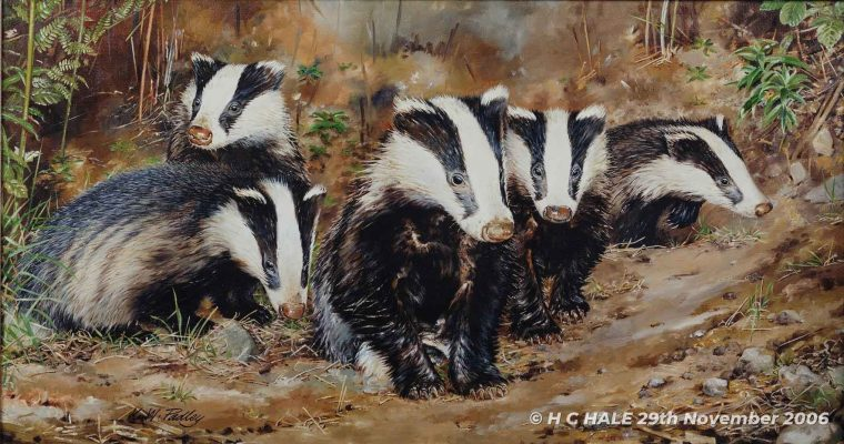 Five badgers - Watercolour/Gouache with Conte painting by Kenneth Padley