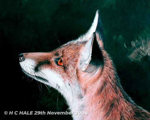 Close up of fox head - Watercolour/Gouache with Conte painting by artist Kenneth Padley