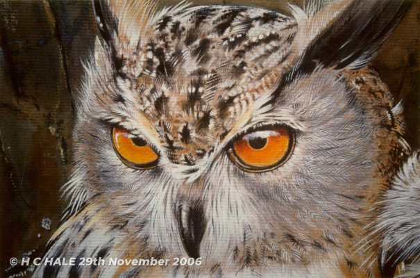 Close up of eagle owl head - Watercolour/Gouache with Conte painting by artist Kenneth Padley