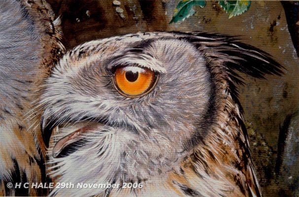 Close up of eagle owl - Watercolour/Gouache with Conte painting by Kenneth Padley