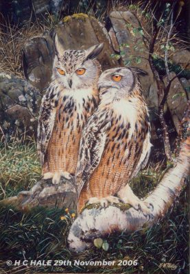 Eagle owls - Watercolour/Gouache with Conte painting by artist Kenneth Padley