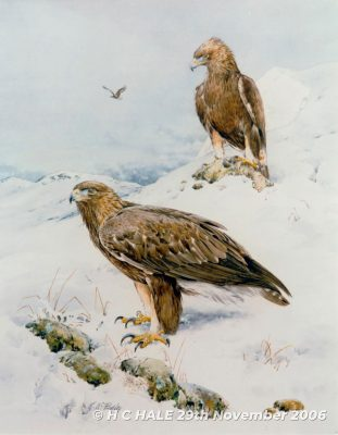 Golden eagles in the snow - Watercolour/Gouache with Conte painting by Kenneth Padley