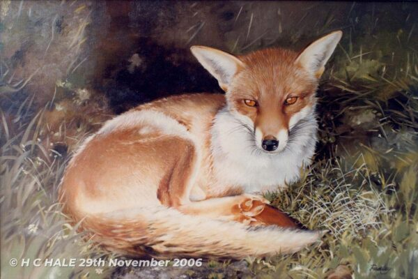Fox resting - Watercolour/Gouache with Conte painting by Kenneth Padley