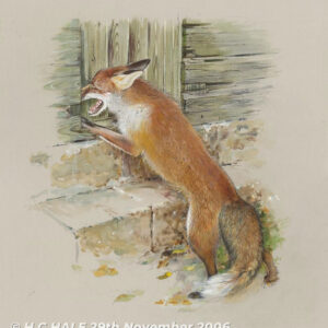 Red fox at barn door - Watercolour/Gouache with Conte painting by Kenneth Padley