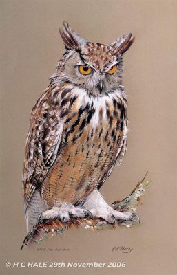 Eagle owl - Watercolour/Gouache with Conte painting by Kenneth Padley