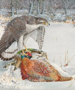 Goshawk with Pheasant - Watercolour/Gouache with Conte painting by Kenneth Padley