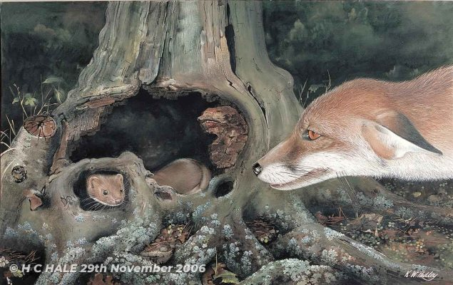 Fox with Weasel - Watercolour/Gouache with Conte painting by Kenneth Padley