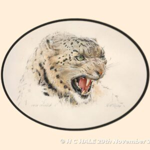 Snow Leopard - Watercolour/Gouache with Conte painting by Kenneth Padley