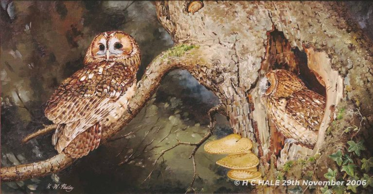 Tawny Owls with Fungi - Watercolour/Gouache with Conte painting by Kenneth Padley