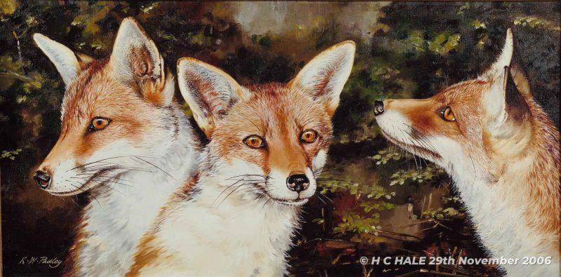 Three fox heads - Watercolour/Gouache with Conte painting by Kenneth Padley
