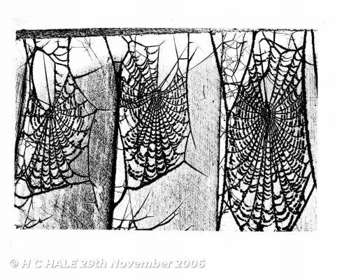 Cobwebs - Creative photograph by Kenneth Padley