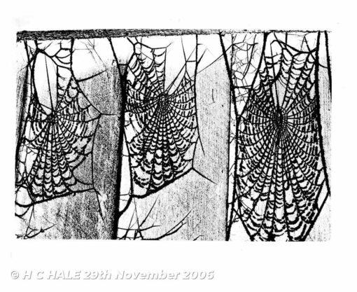 Cobwebs - Creative photograph by Kenneth Padley