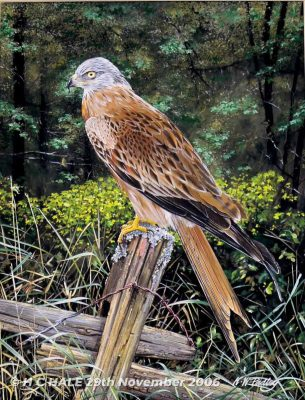 Red kite on post - Watercolour/Gouache with Conte painting by Kenneth Padley