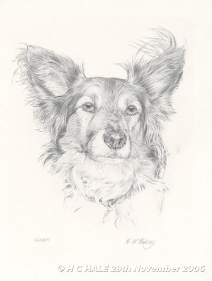 Scampi - Pencil drawing by Kenneth Padley
