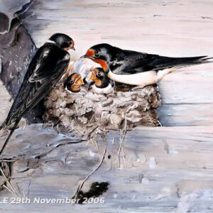 Swallows with nest - Watercolour/Gouache with Conte painting by Kenneth Padley