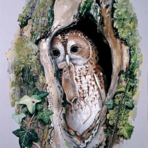 Tawny Owl with Mouse - Watercolour/Gouache with Conte painting by Kenneth Padley