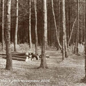 Trees - Creative photograph by Kenneth Padley