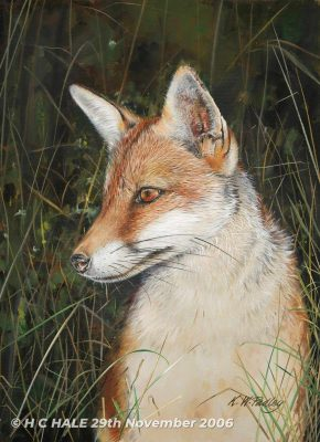 Fox in grass - Watercolour/Gouache with Conte painting by Kenneth Padley